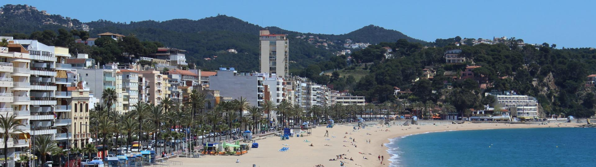 beautiful_flower_on_beach_lloret_de_mar2.jpg